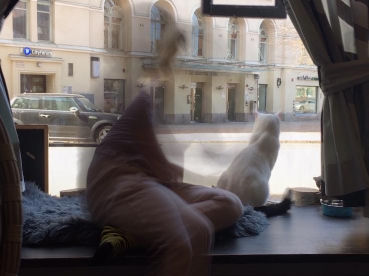 Helkatti, Helsinki, kahvila, Kissakahvila, kissat